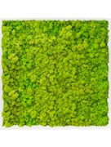 Картина из мха mdf ral 9010 satin gloss 100% reindeer moss (spring green)