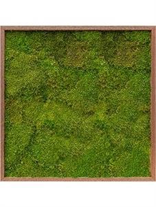Картина из мха meranti 100% flat moss