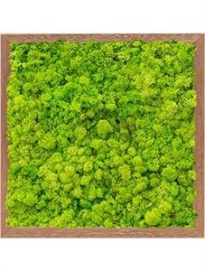 Картина из мха meranti 100% reindeer moss (spring green)