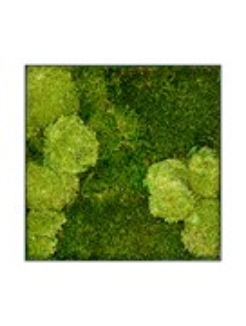 Картина из мха stiel l ral 7016 30% ball- and 70% flat moss
