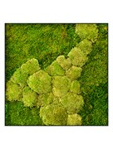 Картина из мха stiel l ral 7016 50% ball- and 50% flat moss