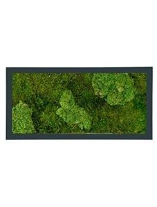 Картина из мха stiel ral 7016 mat 30% ball- and 70% flat moss