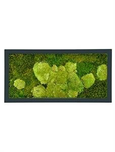 Картина из мха stiel ral 7016 mat 50% ball- and 50% flat moss