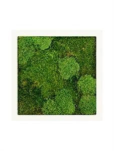 Картина из мха stiel ral 9010 mat 30% ball- and 70% flat moss