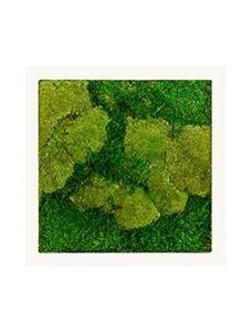 Картина из мха stiel ral 9010 mat 50% ball- and 50% flat moss