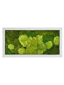 Картина из мха superline 50% ball- and 50% flat moss