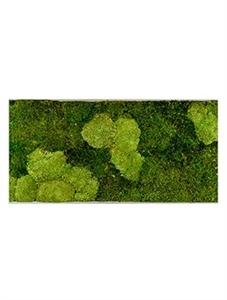 Картина из мха superline l 30% ball- and 70% flat moss