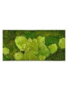Картина из мха superline l 50% ball- and 50% flat moss