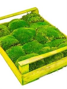 Стабилизированный мох Ball moss Nieuwkoop Europe