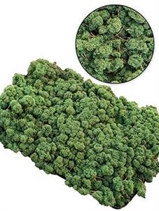 Стабилизированный мох Reindeer moss (dark green) Nieuwkoop Europe