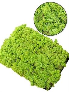 Стабилизированный мох Reindeer moss (forest green) Nieuwkoop Europe