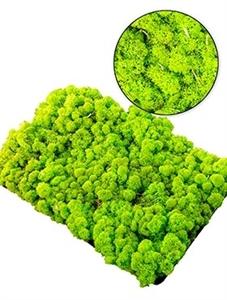 Стабилизированный мох Reindeer moss (spring green) Nieuwkoop Europe