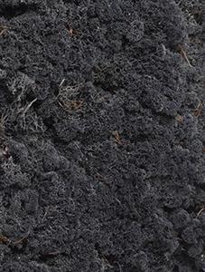 Стабилизированный мох Reindeer moss cladonia (anthracite) Nieuwkoop Europe