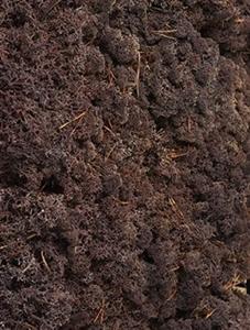 Стабилизированный мох Reindeer moss cladonia (brown) Nieuwkoop Europe