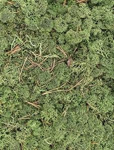 Стабилизированный мох Reindeer moss cladonia (dark green) Nieuwkoop Europe
