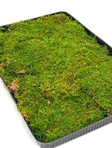 Стабилизированный мох Sheet moss Nieuwkoop Europe