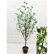 Дерево с распускающимися листочками (искусственное) Альсид