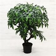 90/ОС/151 Дерево лиственное h90см