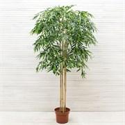 Бамбук латекс*5 ст. (искусственный) Альсид