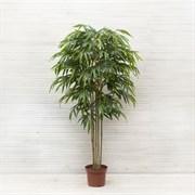 Бамбук *5 стволов латекс премиум (искусственный) Альсид