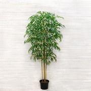 Бамбук *5 стволов латекс (искусственный) Альсид