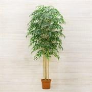 Бамбук х5 стволов латекс (искусственный) Альсид