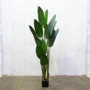 Банановая Пальма (искусственная) Альсид