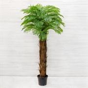 Пальма Арека латекс (искусственная) Альсид