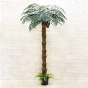 Пальма кокосовая с плодами (искусственная) Альсид