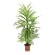 Пальма кустовая (латекс)