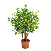 Лимон с плодами(латекс)