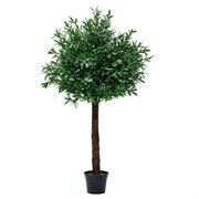 200/О/175 Оливковое дерево 200см (латекс)