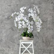 """Орхидея латекс в декоративном кашпо """"арт-бетон"""" (искусственная) Альсид"""