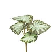 Бегония латекс светло-зелёная (искусственная) Альсид