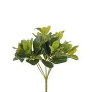 Куст Питтоспорума зелёный латекс (искусственный) Альсид