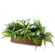 Зелень микс с калатеей в кокосовом боксе (искусственная) Альсид