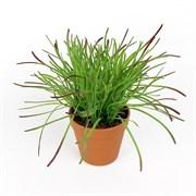 Трава латекс в кашпо (искусственная) Альсид