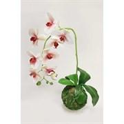 """Кокедама """"Орхидея"""" бело-малиновая латекс (искусственная) Альсид"""