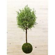 Кокедама Дерево декоративное узкий лист патина (искусственная) Альсид