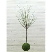 Кокедама Дерево с распускающимися листочками (искусственная) Альсид