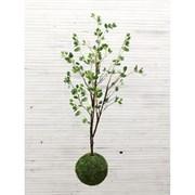 Кокедама Дерево с молодвыми побегами (искусственная) Альсид
