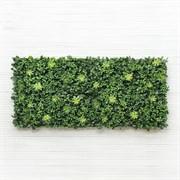 Фитостена с зелёными суккулентами и чернич. (искусственная) Альсид