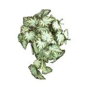 Бегония ампельная зелёная в кашпо (искусственная) Альсид