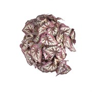Бегония ампельная вишневая в кашпо (искусственная) Альсид