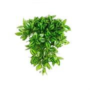 Традесканция ампельная зелёная в кашпо (искусственная) Альсид