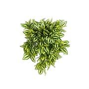 Традесканция ампельная жёлто-зелёная в кашпо (искусственная) Альсид