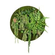 Фитокартина с зеленью (искусственная) Альсид