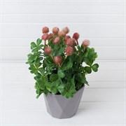 Клевер малиновый в декоративном кашпо (искусственный) Альсид