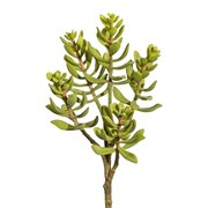 Крассула зелёная (искусственная) GL
