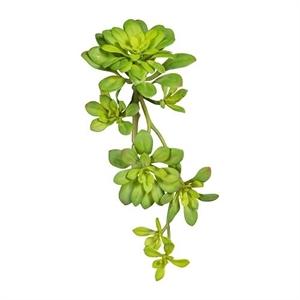Эхеверия ветка зелёная (искусственная) GL